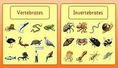 Berdasarkan Struktur Tubuhnya Siput Termasuk Hewan