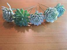 wired succulent for diy wedding bouquets
