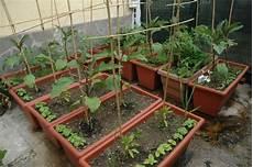 viridea vasi l orto nei vasi salute e benessere a misura di balcone