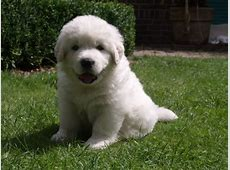 tatra hond!   HondenForum