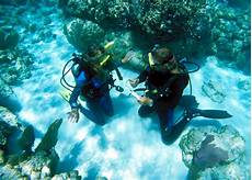 scuba certification belize personalized padi diving lessons