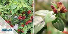 diese zimmerpflanzen brauchen nur wenig licht liste