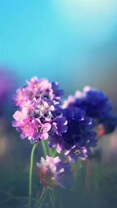 iphone purple flower wallpaper 20 free flowers iphone wallpapers premiumcoding