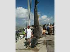 texas shark fishing guides