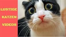 Lustige Ausmalbilder Katzen Listetop10 Lustige Katzen Zum Totlachen Lustige