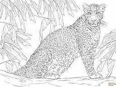 leopard sitting on tree coloring malvorlagen