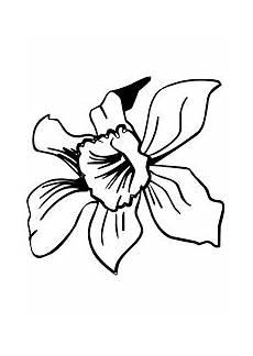 dibujo de los simbolos naturales para colorear pin en tercer grado