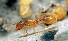Ameisen Im Haus Woher - woher kommen die heimischen ameisen und ob sie gef 252 rchtet