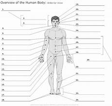 anterior view of the human unlabeled health fitness anatomy physiology anatomy