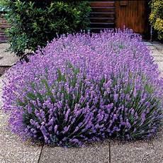 Blumen Sonniger Standort - welche pflanzen f 252 r sandige b 246 den stauden garten