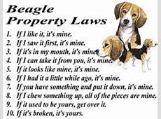 46 beste afbeeldingen van Regels bezittingen   Honden