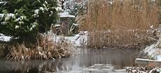 teich winterfest machen so mache ich meinen teich winterfest wptest naturteiche