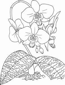 Window Color Malvorlagen Orchideen Malvorlage Orchidee Kostenlos 2 Gif 441 215 578 Flower