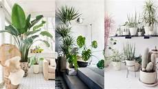 10 beautiful ways to decorate indoor plant in living room
