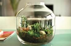 viridea vasi le piante in vasi di vetro e in bottiglia viridea