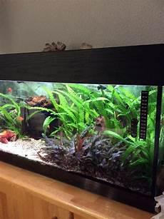 sch 246 nes gepflegtes aquarium in karlsruhe fische