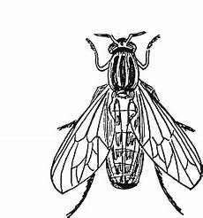 Insekten Malvorlage Kostenlos Insekten Malvorlagen Malvorlagen1001 De