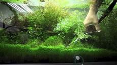 plante d eau entretien et taille des plantes d aquarium ada nature