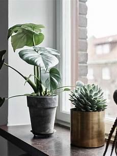 pflanzen deko wohnzimmer fensterbank deko die farben der natur durch pflanzen