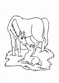 ausmalbilder stute mit fohlen pferde malvorlagen