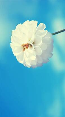 free flower wallpaper phone hd flower iphone 5 wallpaper hd free