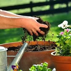 pflanzen gegen schimmel blumenerde schimmelt hilfe bei schimmel im blumentopf