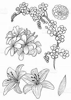 Malvorlage Exotische Blumen Drawing Of Flowers Rendering As Vector And