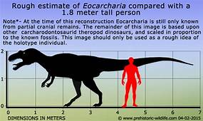 Eocarcharia