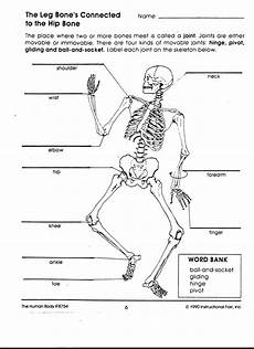 types of bones worksheet mr t a way to keep in touch
