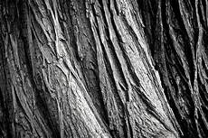 black white wood free images nature forest branch black and white