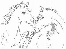 cara ternak kambing ternak kuda