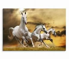 120x80cm wandbild pferde wiese wolken abendrot sinus