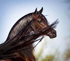 pferde kaufen f 252 r whatsapp bilder und spr 252 che f 252 r
