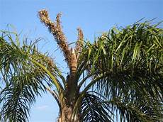 tree doctor cape coral florida root fertilization