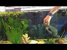 anleitung putzen und reinigen vom aquarium wasserbecken