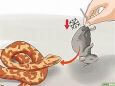wie wird mäuse los eine schlange f 252 ttern wikihow