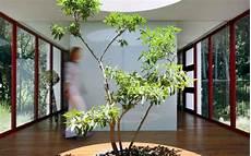 arbre d interieur design 5 maisons avec un arbre 224 l int 233 rieur