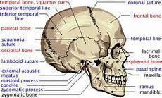 Muskuloskeletal Anatomi Fisiologi Muskuloskeletal