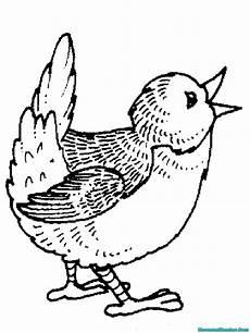 Gambar Mewarnai Burung Hantu Untuk Kolase Buku Gambar