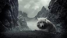 White Wolf Wallpaper 1920x1080