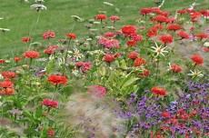 dahlien pflanzen standort und pflege utopia de