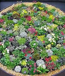 steingarten stauden mix 10 pflanzen garten garten ideen