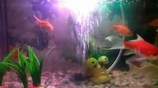 57 Gambar Ikan Hias Di Dalam Aquarium Koleksi Baru