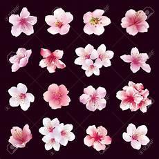 fleur de cerisier dessin dessin fleur cerisier ensemble de diff 233 rentes belles