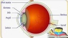 12 Fungsi Mata Manusia Secara Umum Beserta Bagiannya