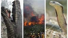 Kisah Petugas Padamkan Kebakaran Hutan Merinding Lihat