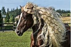 Schöne Pferde Bilder - mehr als 70 sch 246 ne pferde bilder lifestyle