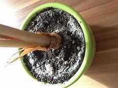 pflanzen gegen schimmel hilfe tierchen in der pflanzenerde pflanzen