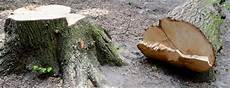 couper un arbre 12261 comment abattre un arbre en pratique