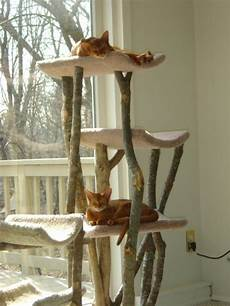 cat trees 20 photo cat dompict